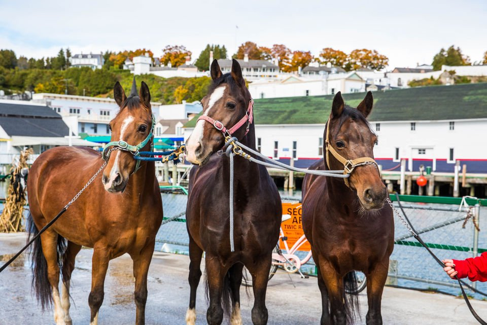 How Grand Hotel's horses spend their winter vacation